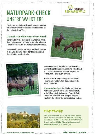 Naturpark-Check: Unsere Waldtiere